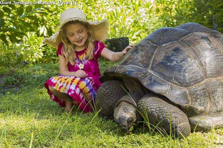Giant Tortoises © Mason's Travel (1)