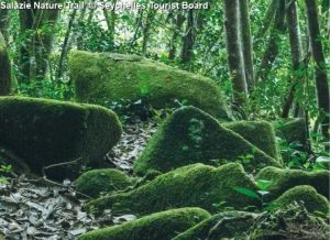 Salazie Nature Trail © Seychelles Tourist Board