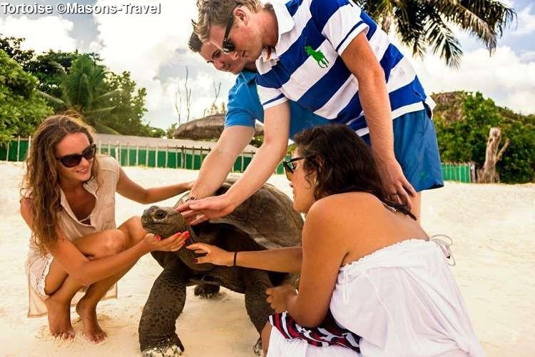 Tortoise ©Masons Travel