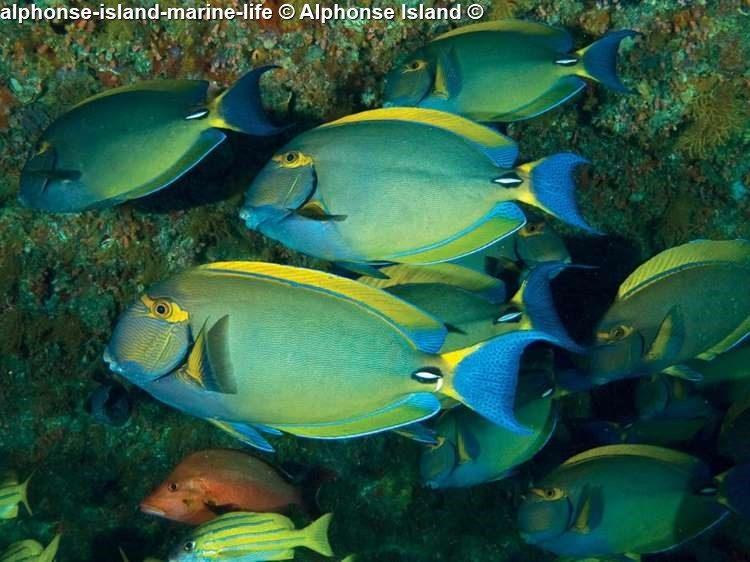 Alphonse Island Marine Life © Alphonse Island ©