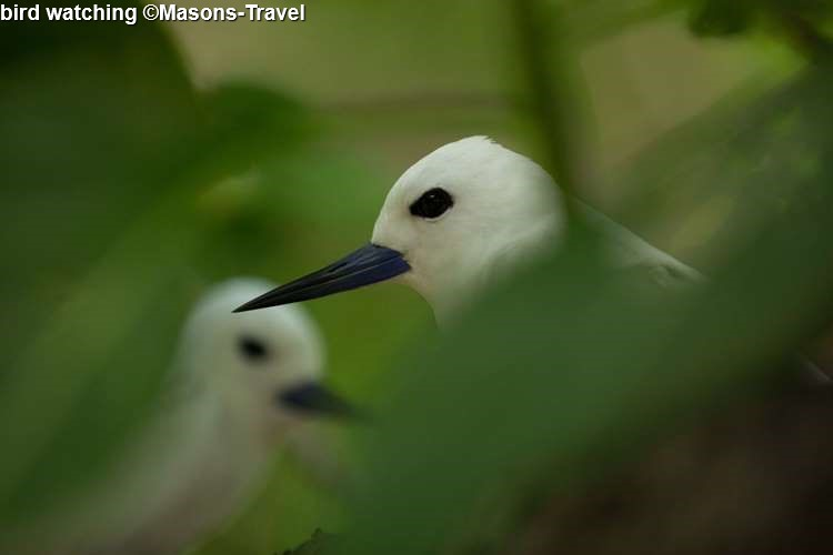 Bird Watching ©Masons Travel