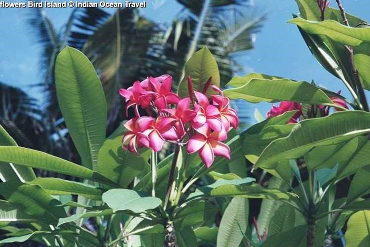 flowers Bird Island Indian Ocean Travel