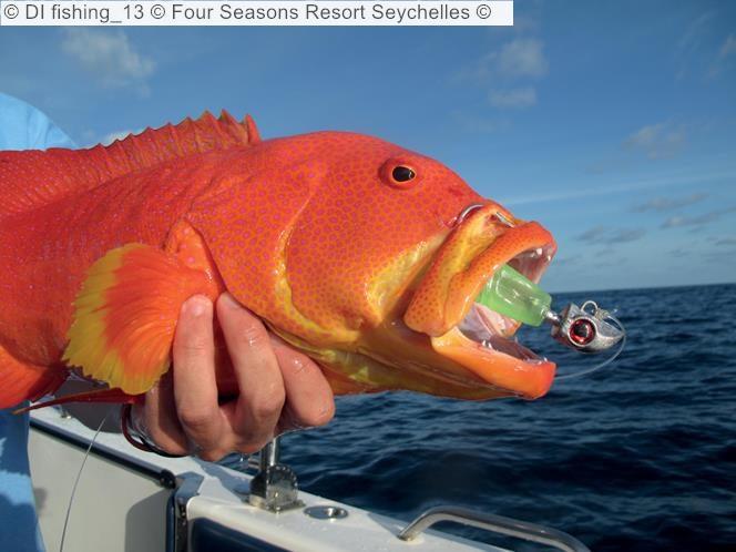 DI fishing Four Seasons Resort Seychelles