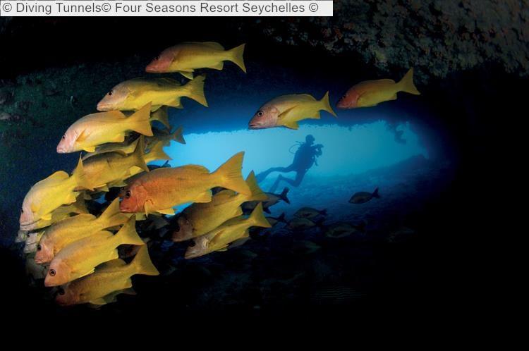 Diving Tunnels Four Seasons Resort Seychelles