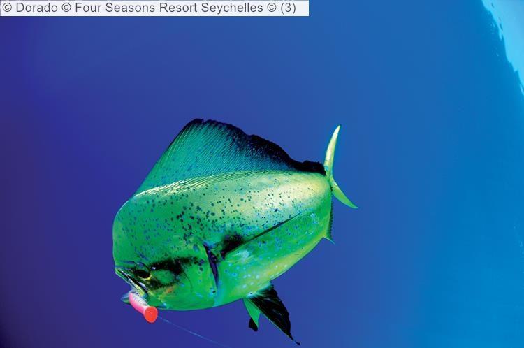 Dorado Four Seasons Resort Seychelles