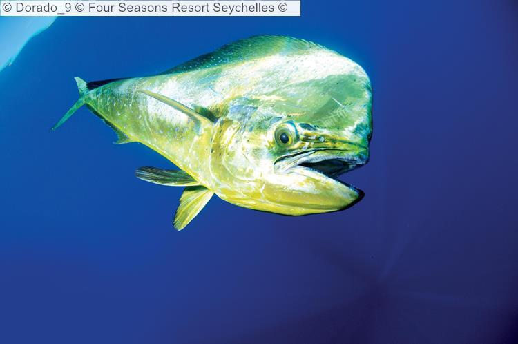 Dorado © Four Seasons Resort Seychelles ©