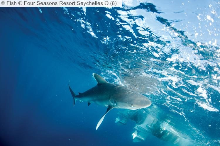 Fish Four Seasons Resort Seychelles