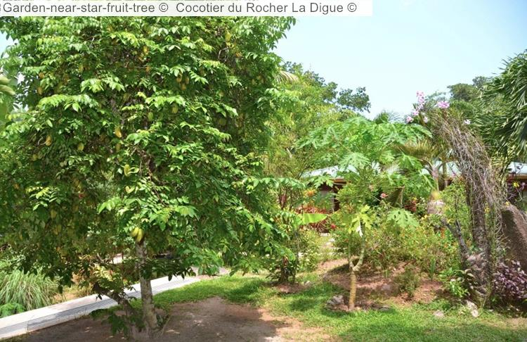 Garden Near Star Fruit Tree © Cocotier Du Rocher La Digue ©