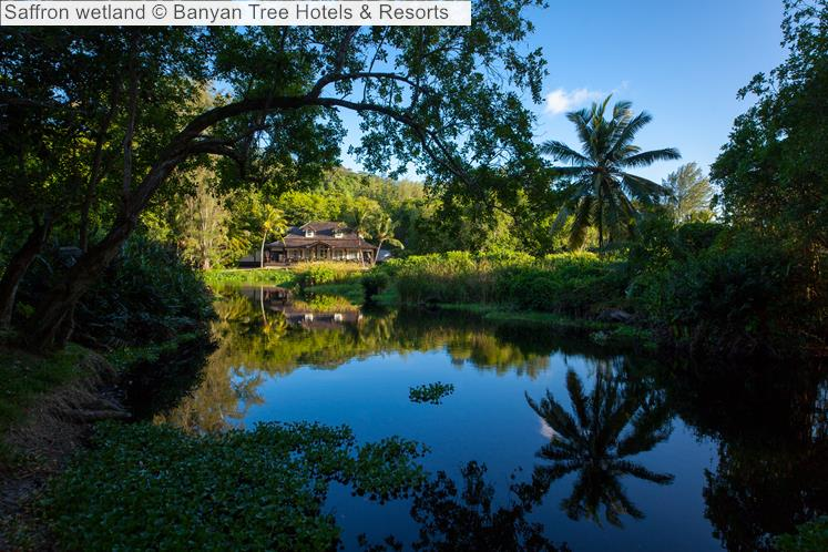 Saffron wetland Banyan Tree Hotels Resorts Seychelles