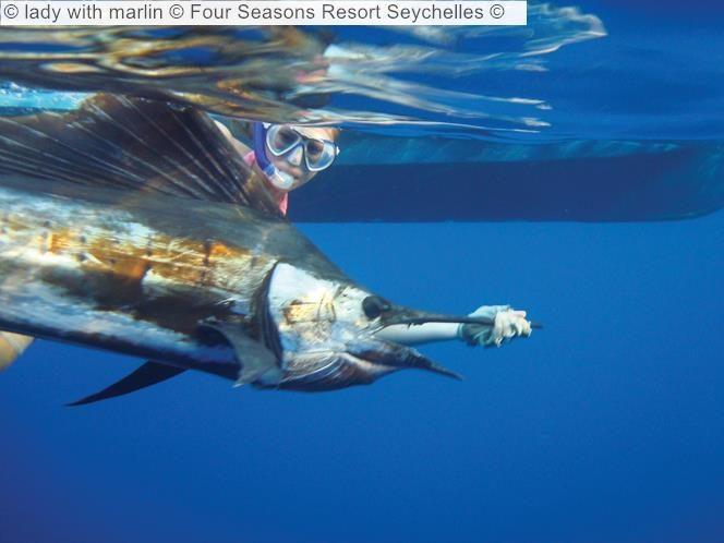 lady with marlin Four Seasons Resort Seychelles