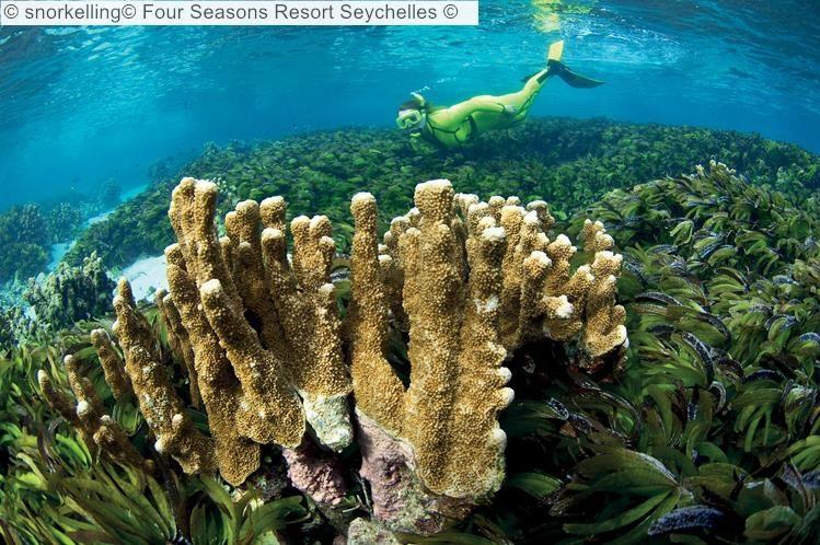 snorkelling Four Seasons Resort Seychelles