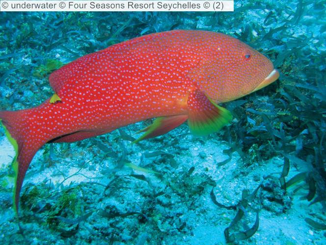 Underwater © Four Seasons Resort Seychelles ©