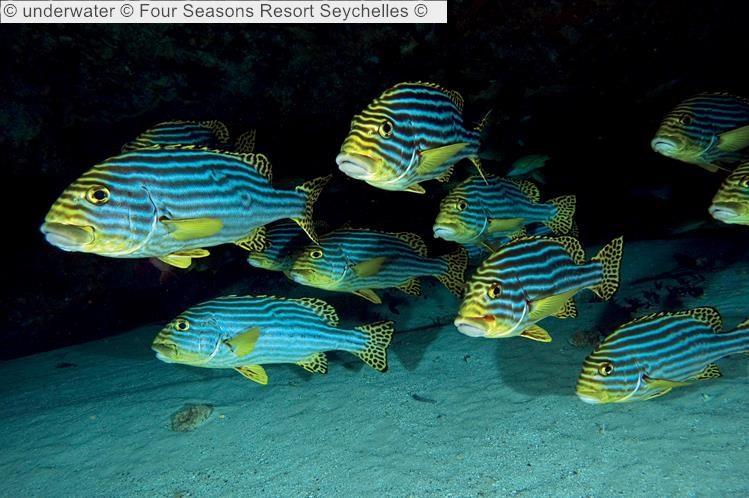 underwater Four Seasons Resort Seychelles