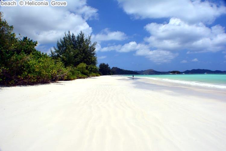 beach Heliconia Grove