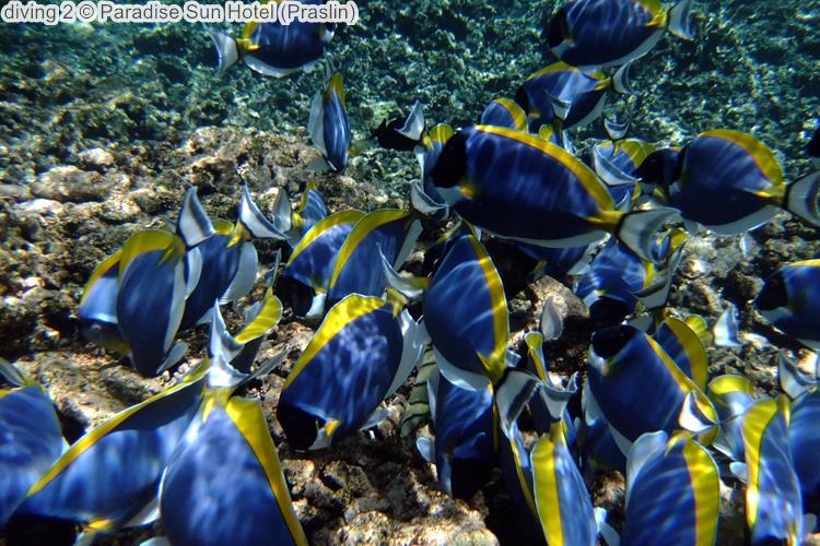 diving Paradise Sun Hotel Praslin