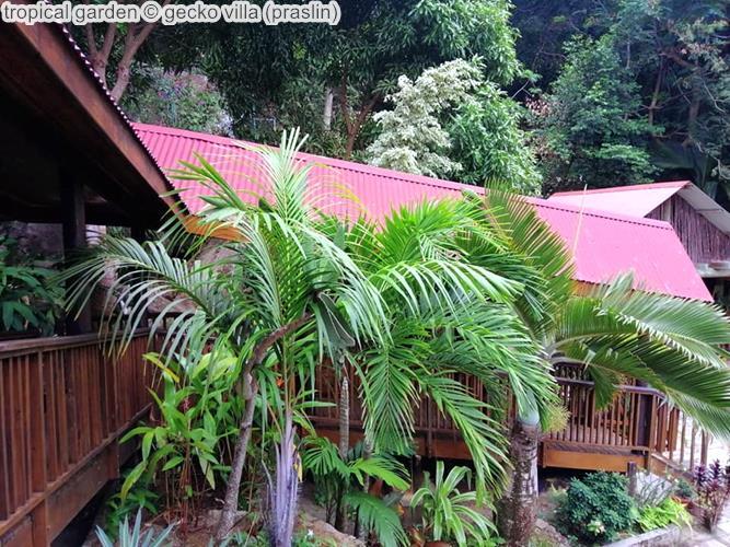 tropical garden gecko villa praslin