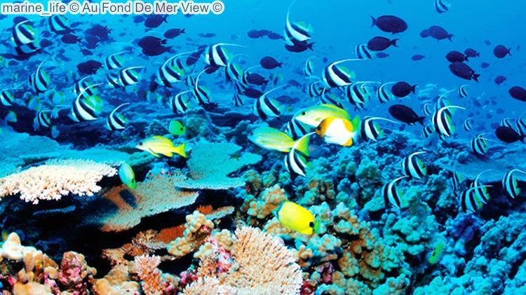 marine life Au Fond De Mer View
