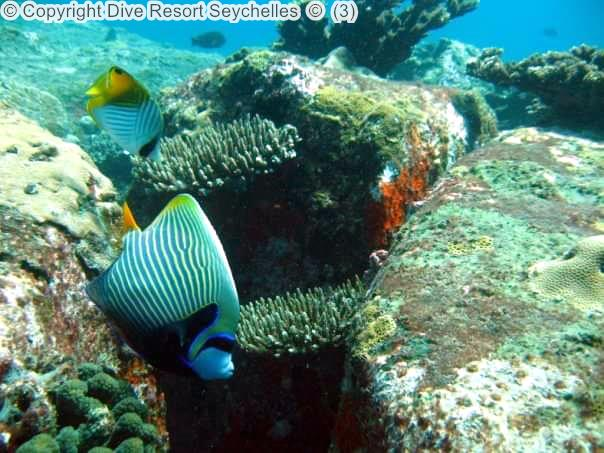 Copyright Dive Resort Seychelles