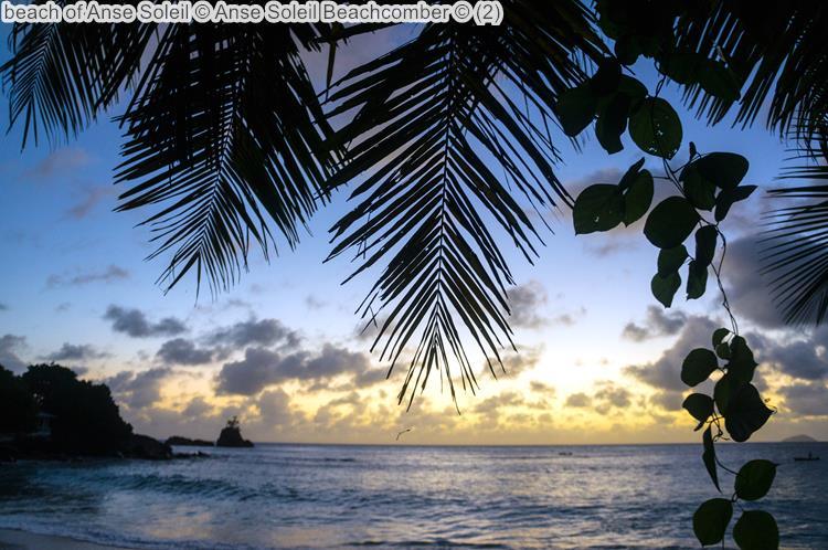 beach of Anse Soleil bij Anse Soleil Beachcomber Mahé Seychellen