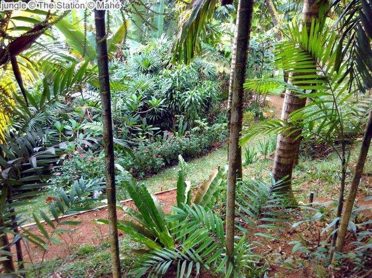 jungle The Station Mahé