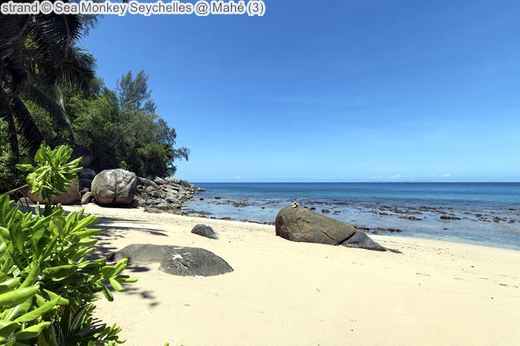 strand Sea Monkey Seychelles Mahé