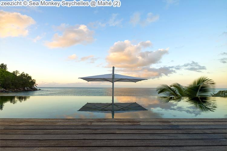 zeezicht Sea Monkey Seychelles Mahé