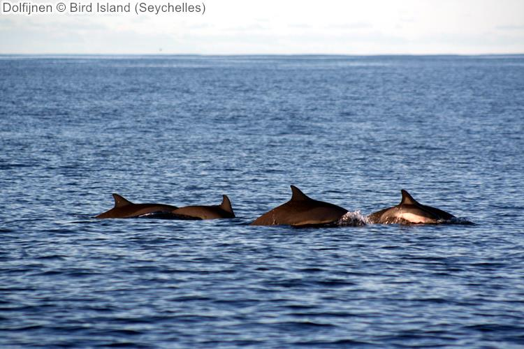 Dolfijnen Bird Island Seychelles