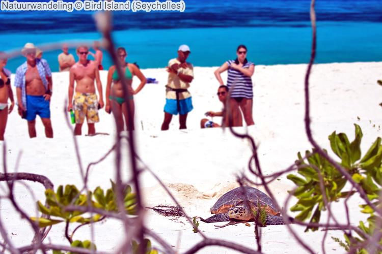 Natuurwandeling Bird Island Seychelles