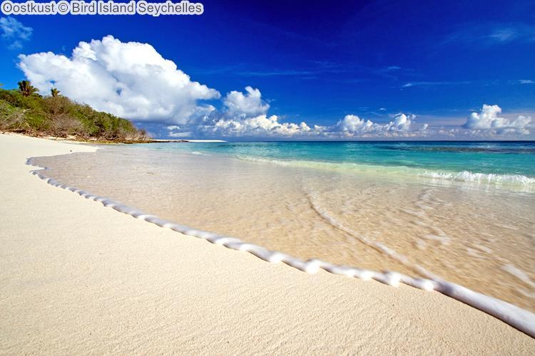 Oostkust Bird Island Seychelles