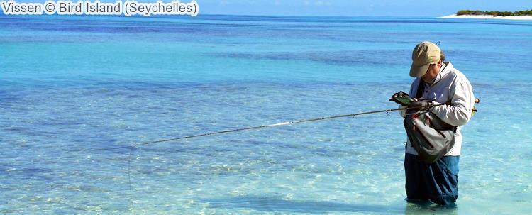 Vissen Bird Island Seychelles