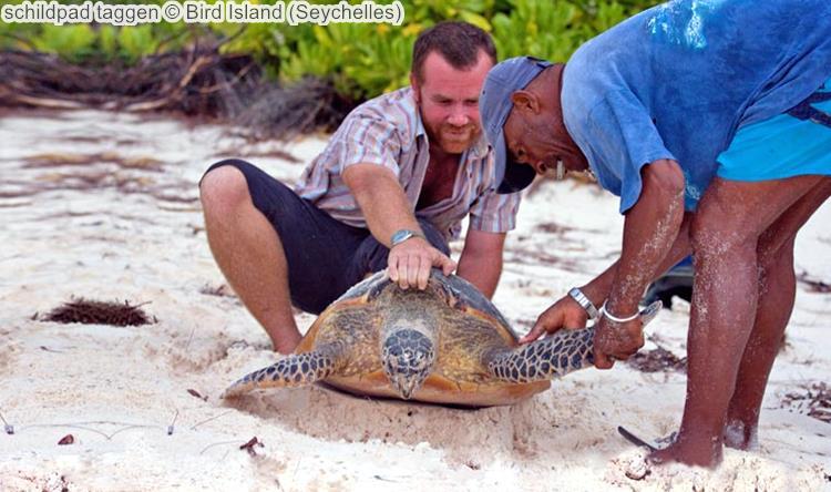 schildpad taggen Bird Island Seychelles