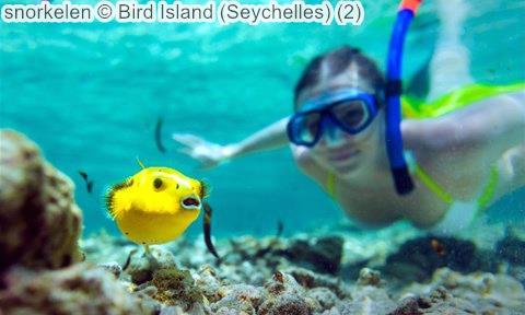 snorkelen Bird Island Seychelles