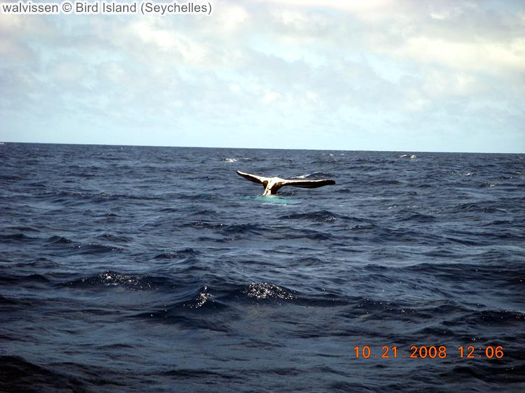walvissen Bird Island Seychelles