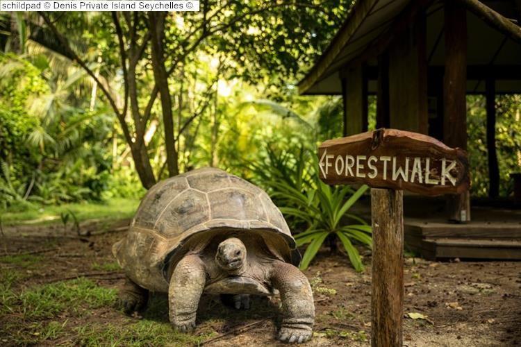 schildpad Denis Private Island Seychelles