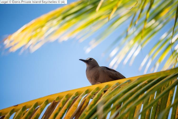 vogel Denis Private Island Seychelles